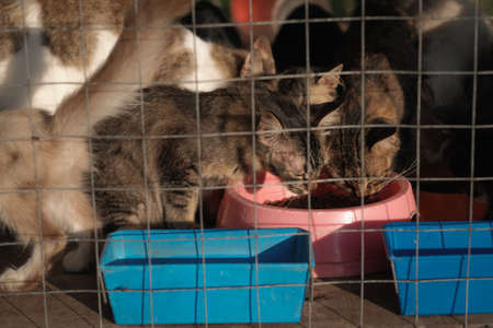 Pet cat eating cat food in the cage