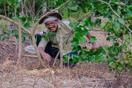 Farmer working in the garden. Farmer planting lime tree . Agricultural concept Stock fotó