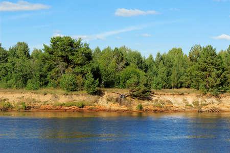 riverside trees: Summer landscape: pine trees at riverside