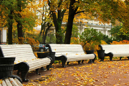 Benches in autumn park photo