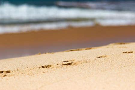 Footprints on sand on the beach close up with sea surf of coastline in Sri Lanka, Ceylon photo