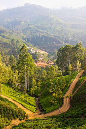 Tea fields in Nuwara Eliya, Sri Lanka photo