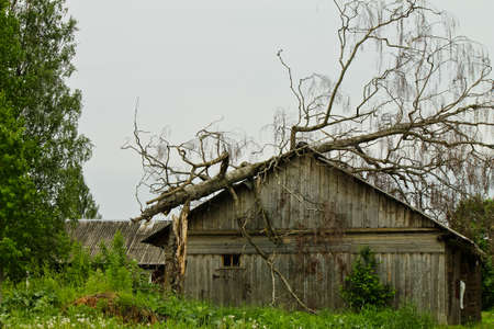 decimated: Large old tree falls on and destroys a small house