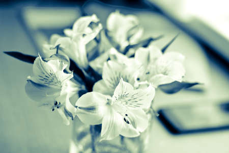 beautiful anniversary: Office composition: bouquet of white freesia flowers and smartphone. Vintage image. Focus on flowers Stock Photo
