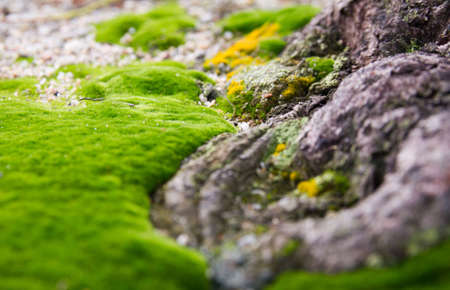 green carpet of moss