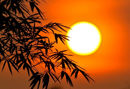 clouds: garden: sun and bamboo leaves Stock Photo