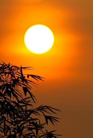 sunrise with bamboo leaves in silhouette in my backyard garden