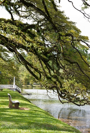 an empty garden chair by the lake bank with branch of rain tree above