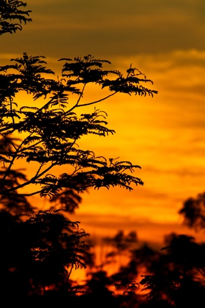 sunrise with golden rays of sun with  dark vegetation silhouette in portrait orientation photo