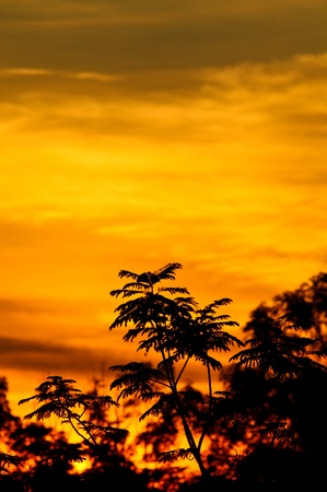 sunrise with golden rays of sun with  vegetation silhouette in portrait orientation photo