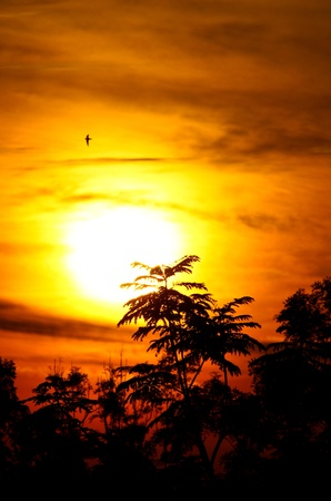 sol naciente: la salida del sol con los rayos dorados del sol con la silueta de las aves y la vegetaci�n en la orientaci�n portrain Foto de archivo