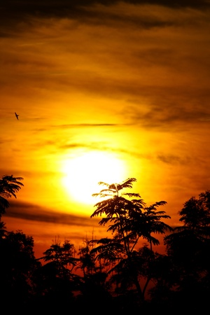 sunrise with golden rays of sun with birds and vegetation silhouette