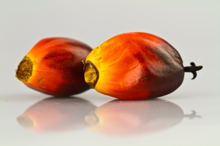 two oil palm seeds on a reflecting white surface Stock Photo