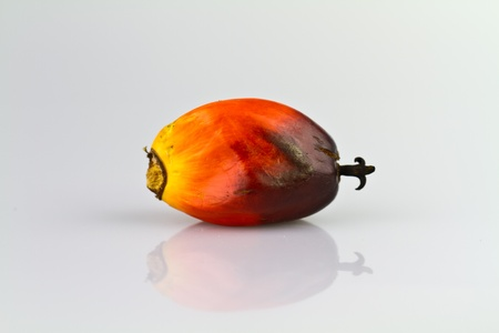a single oil palm seed on a reflecting white surface photo