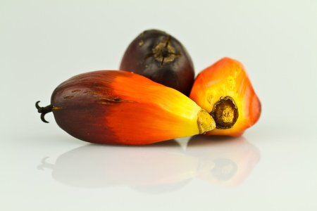 palm oil plantation: three oil palm seeds on a reflecting white surface
