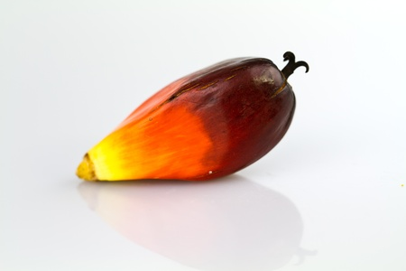 a single oil palm seed on a white surface photo