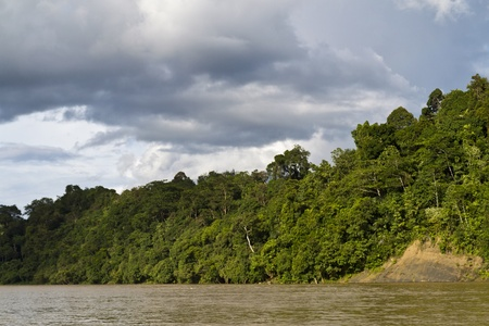 view of rainforest by the edge of Rajang River in Sarawak, Malaysia with dark clouds forming in the background Stock Photo - 12638211