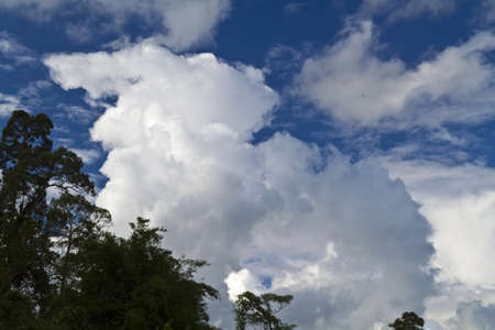 Sky with white cloud in the background and raintree in the foreground Stock Photo - 12638207