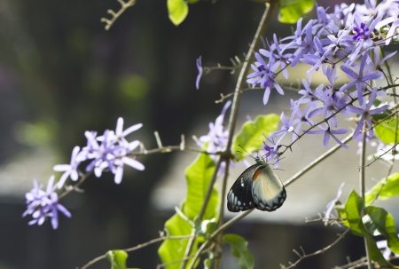 Butterfly collecting nectar from a purple flower in the morning light