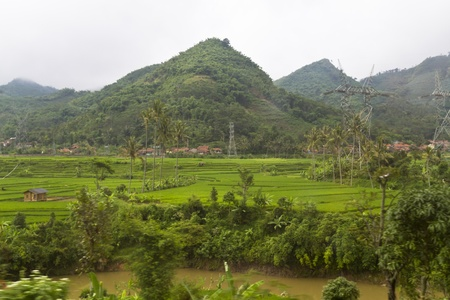 view of paddy field terrace by the mountain side with electric pileon in Bandung, West Jawa Stock Photo - 12639126