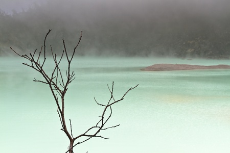 Dead tree branches at the edge of volcanic crater lake with fog forming at in the background in Kawah Putih, Bandung Indonesia photo