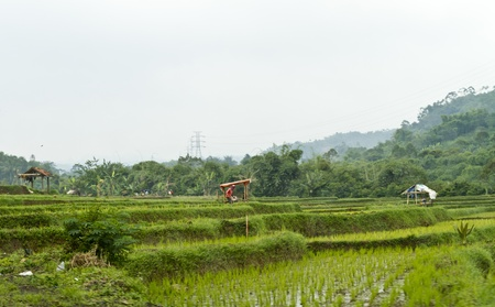 view of paddy field by the hillside with wooden hut in the center Stock Photo - 12639191