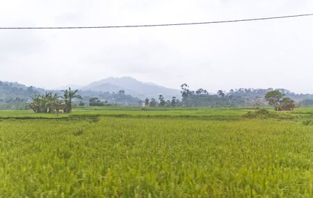 view of a paddy field taken from moving vehicle in Bandung, West Jawa Stock Photo - 12639192