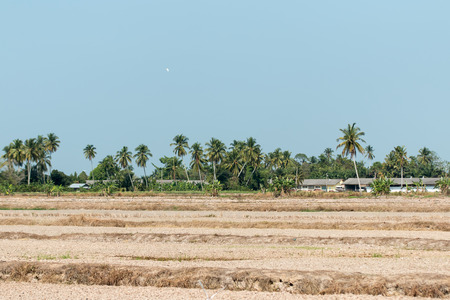 padi: View of a paddy field after harvest in rural Malaysia Stock Photo