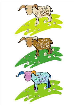 grazed: The lamb walks on a meadow