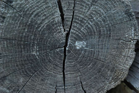 stratification: Photo of a cut of an old tree covered with cracks and radial rings