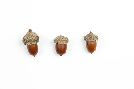 collage. fir cones on white isolated background. Stok Fotoğraf
