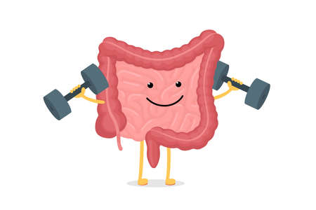 Cute cartoon healthy intestines character with dumbbells. Abdominal cavity digestive and excretion human internal organ. Small and colon intestine with duodenum rectum and appendix vector illustration Ilustracja