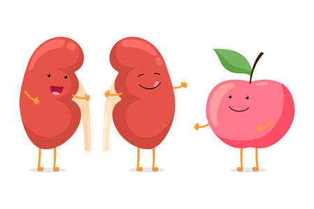 Strong healthy happy kidney smiling emotion character with red apple. Human anatomy genitourinary system internal organ with eco food nutrition. Vector vegetable cartoon illustration Ilustrace