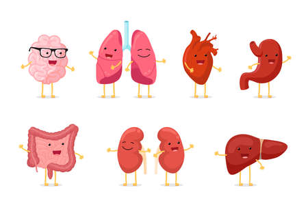 Cute cartoon healthy human anatomy internal organ character set with brain lung intestine heart kidney liver and stomach mascots. Vector isolated  illustration Illustration