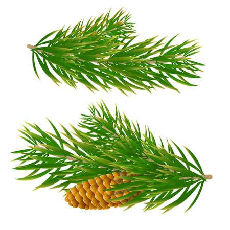 Weihnachtsbaum mit Konus