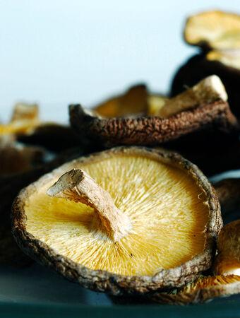 말린, 맛있는, 야생 표고 버섯 흰색 배경에 스톡 콘텐츠