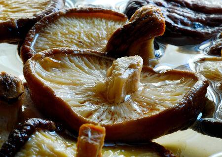 흰색 배경에 말린, 맛, 야생 표고 버섯 스톡 콘텐츠