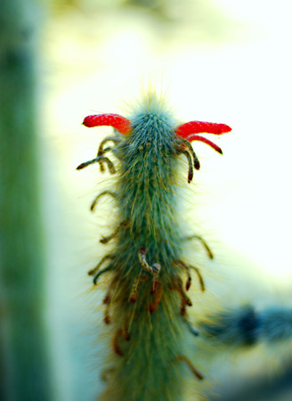 Cactus plant green with sharp spines, desert. photo