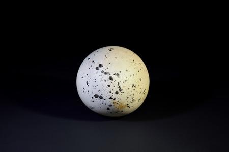 carboniferous: White dotted dinosaur egg on a black background. Stock Photo