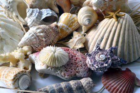 Collection of colored shells with different shapes on the background. photo