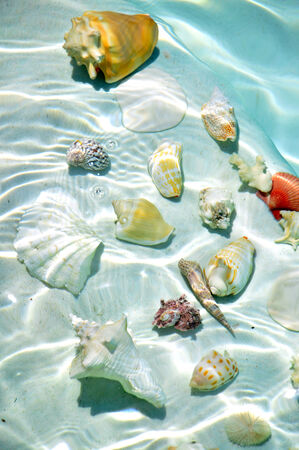 Seashells under water in a cold blue clear water. photo