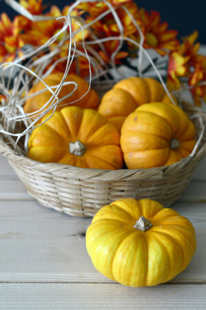 Pumpkin orange ripe for a fresh round of beautiful autumn holiday.