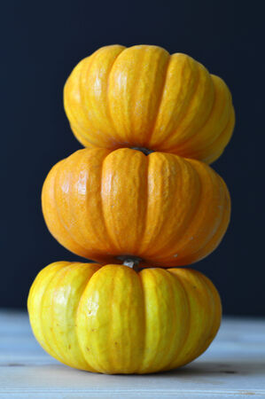 Pumpkin orange ripe for a fresh round of beautiful autumn holiday. photo