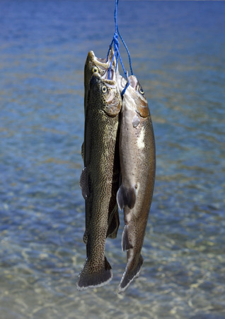 Rainbow trout fresh beautiful on a rope on the background of the river. photo