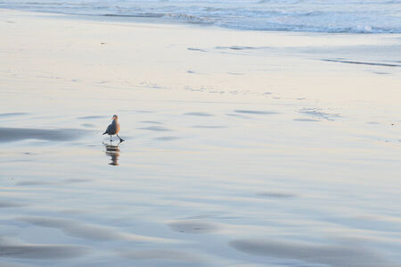 baptize: Seagull beautiful graceful bird that lives near the ocean and eat fish. Stock Photo