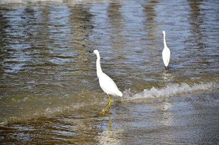 White heron bird with a long beak and large wings.