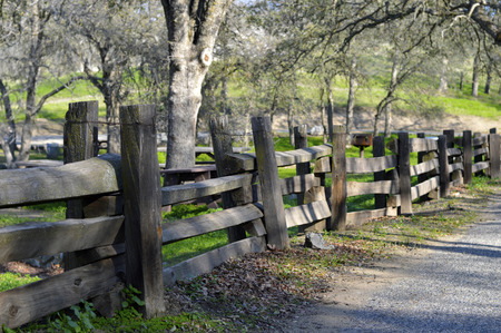 Wooden fence in the summer open space park photo