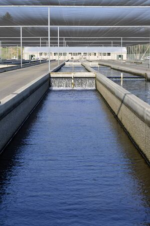 fish farm: Fish farm in the cool clear water channels.
