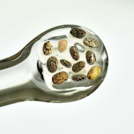Chia seeds macro  tiny  healthy plant food