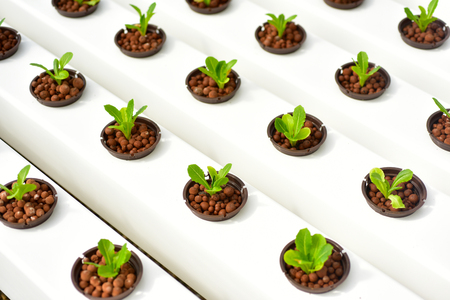 Hydroponics method of growing plants in greenhouse